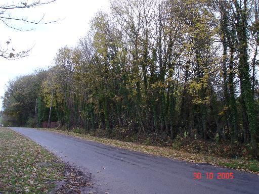 Lane near Pant Glas