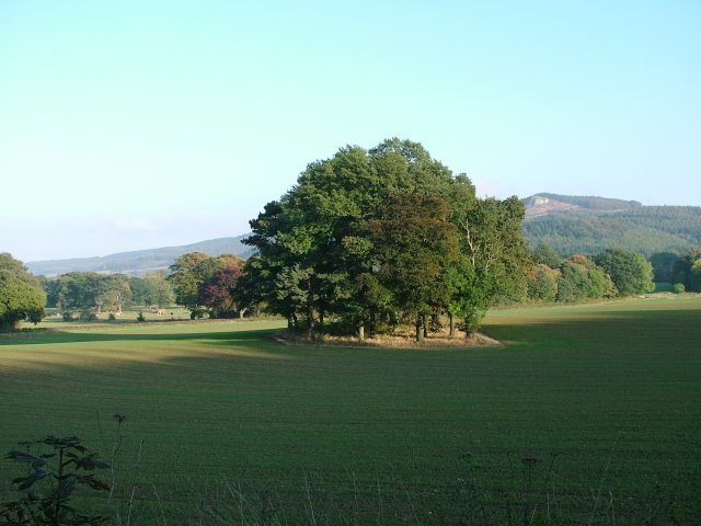 Trees in the shadow of Guisborough Forest