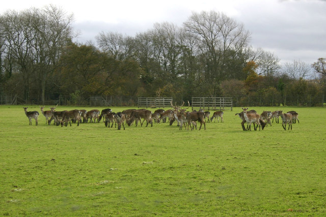 Deer Farm, Harome