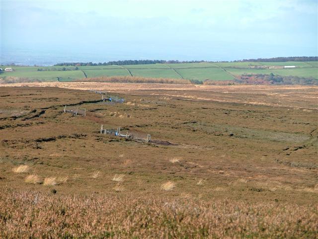 Grouse Butts, Leystone Ridge, Osmotherley Moor