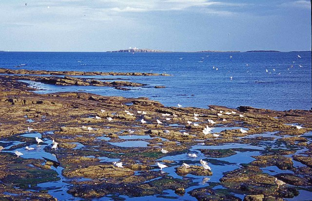 Rocky Area of Seahouses looking towards Farne Islands