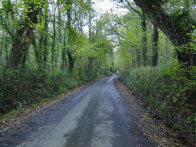 Woodland near West Ogwell