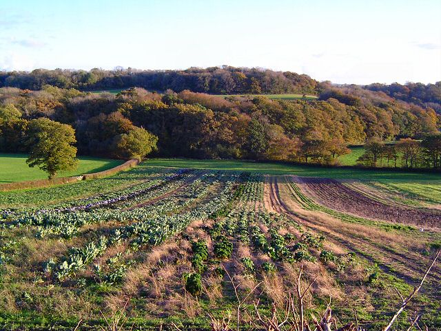 Teignbridge cabbage crops
