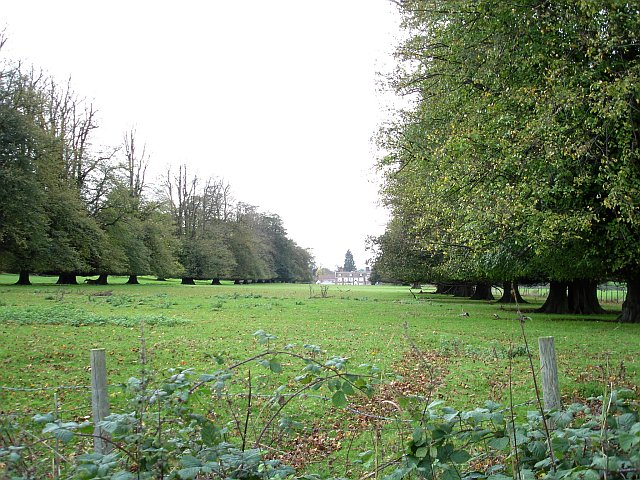 Avenue of limes, Chilston Park