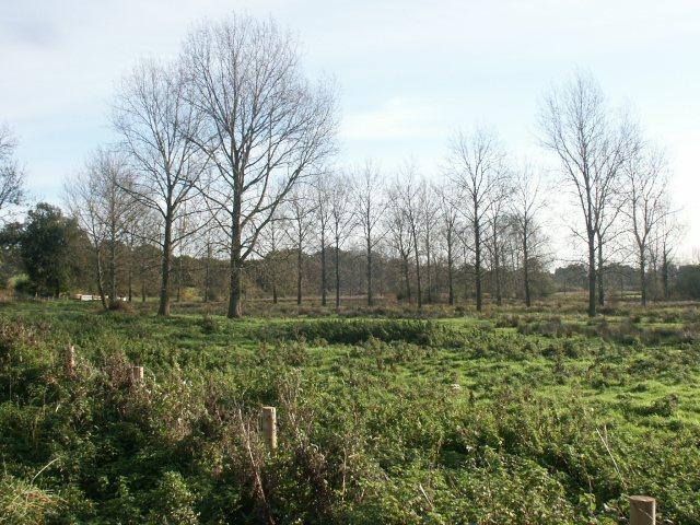 Grazing marshes, Easton
