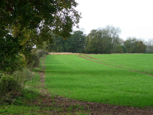 Field boundary and Pheasant cover