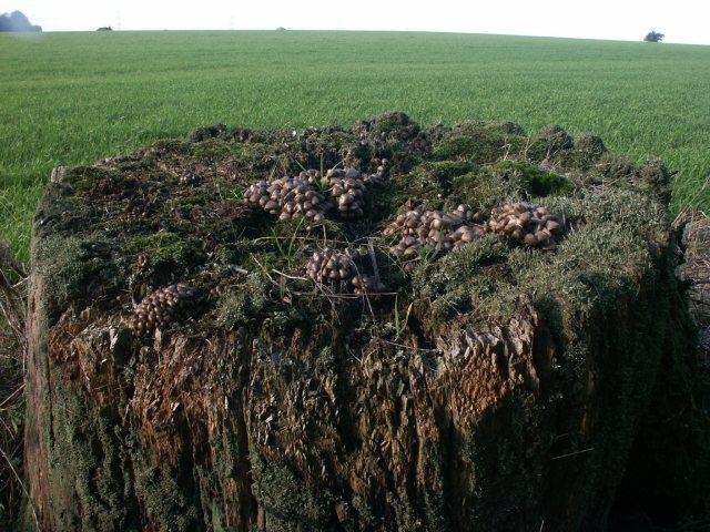Fungi, Barford