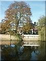 TG1106 : Pond, Wramplingham by Katy Walters