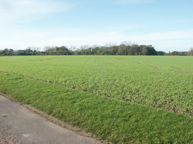 Fields, Wramplingham