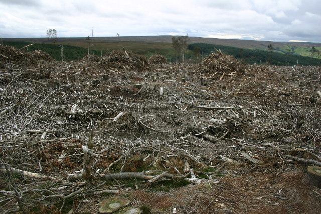 Wintergill Plantation, Glaisdale