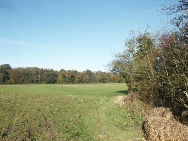 Fields and woods, near Carleton Forehoe