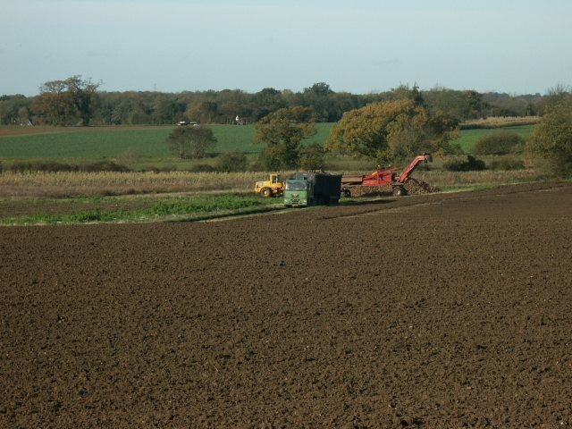 Sugar beet harvest, near Wymondham