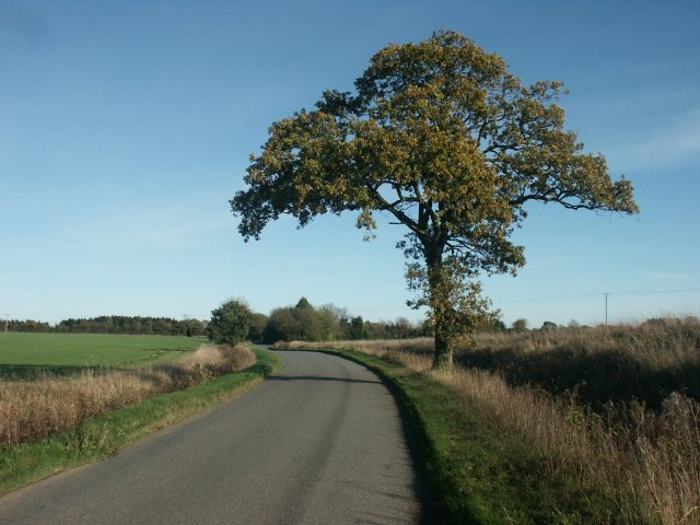 Tree, Downham
