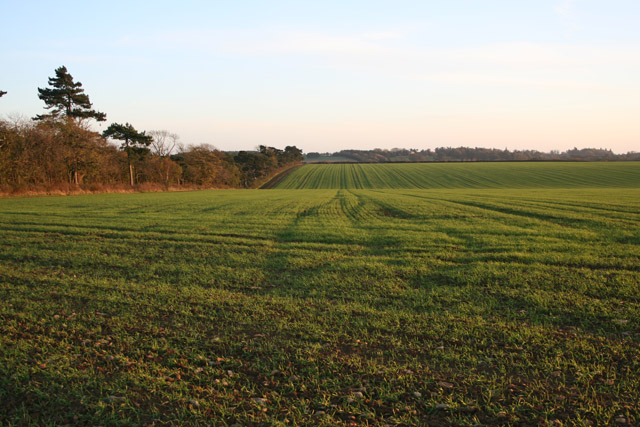 Farmland between Sproxton and Buckminster