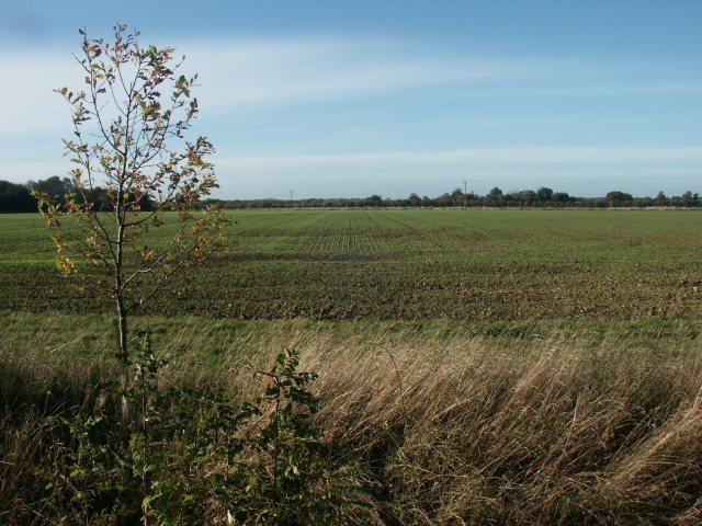 Fields, Downham
