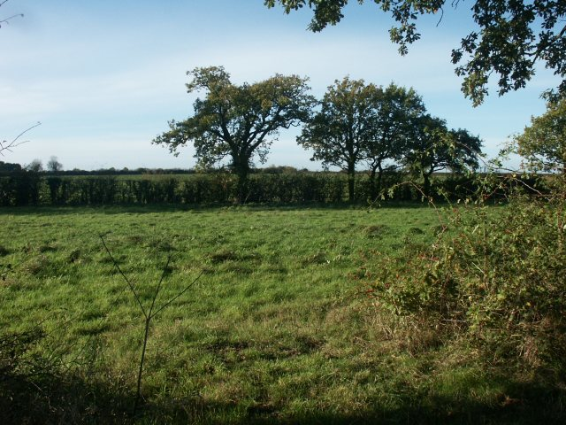 Rough grassland, near Great Melton