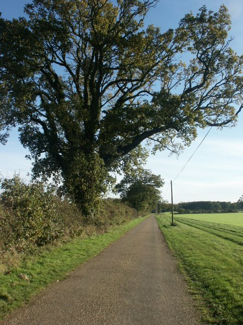 Track to Wong Farm, near Wymondham