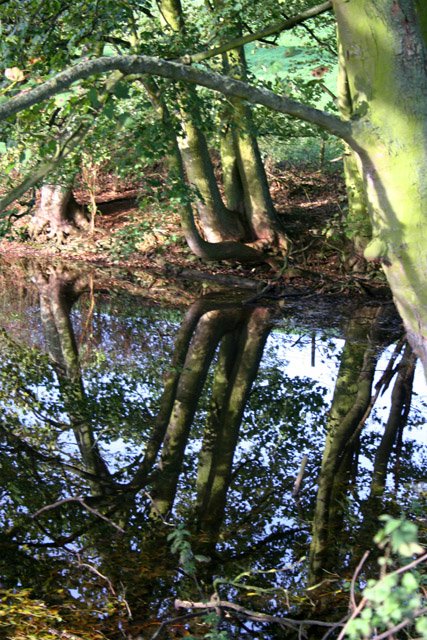 Pond near Wyville