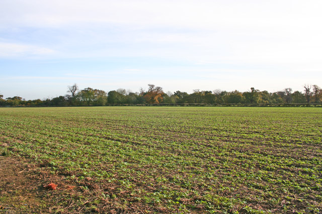 Farmland, Lings Hill
