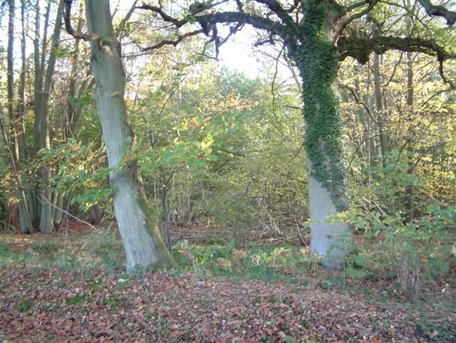 Morgaston Wood