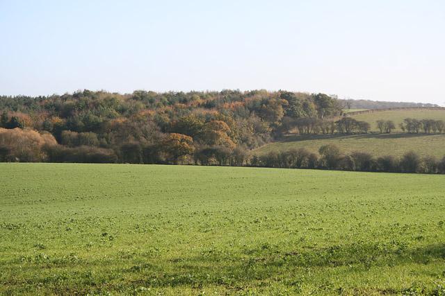 Stonesby Spinney