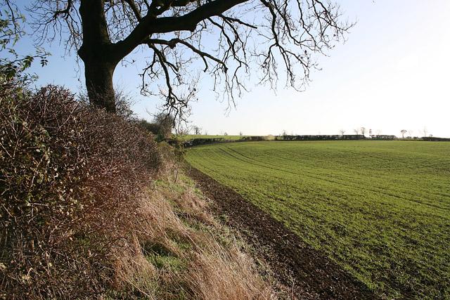 Farmland near Coston