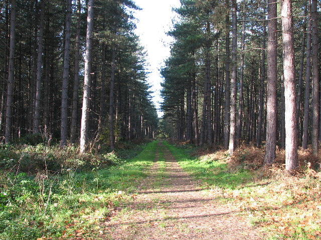 Stapleford Woods