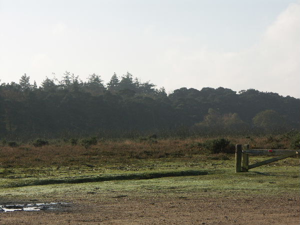 Norley Inclosure, New Forest National Park, Hants