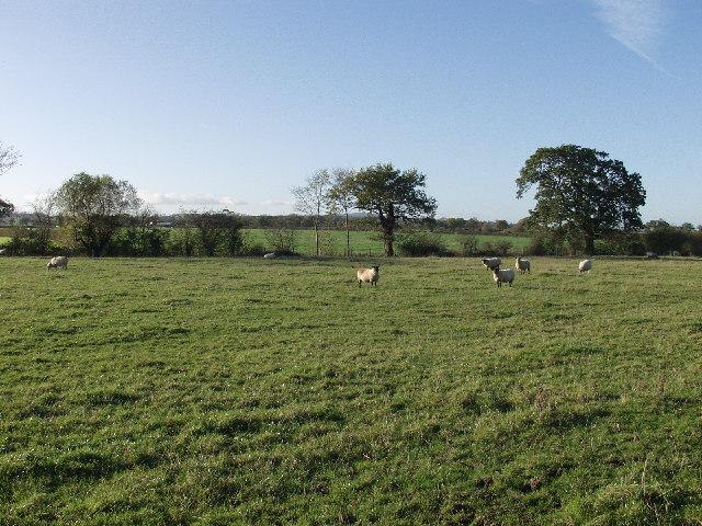 Grazings at Lodge Farm