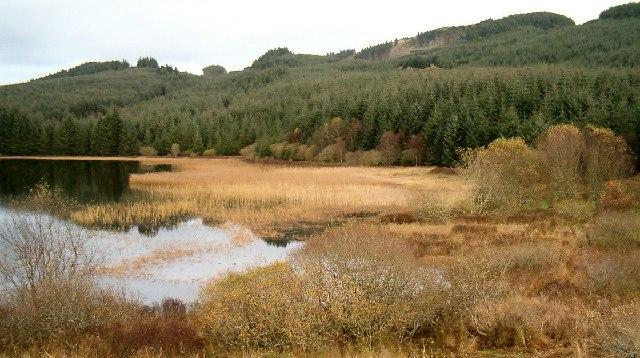 Wetland, Loch Leathan, Glassary, Argyll