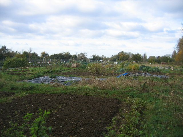 Allotments behind Estcourt Road