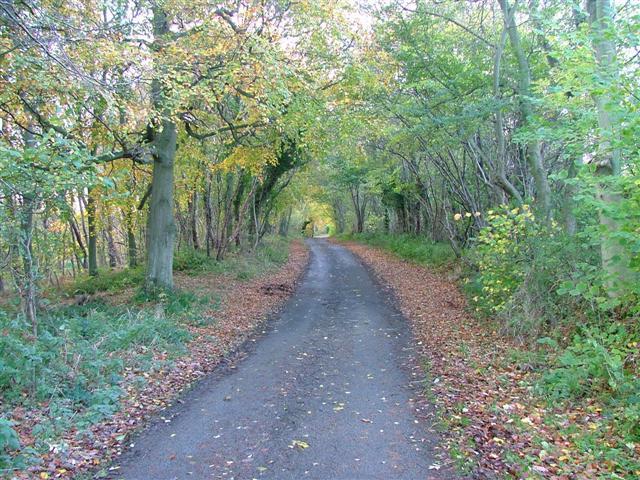 Ridge Lane, Roxby Woods