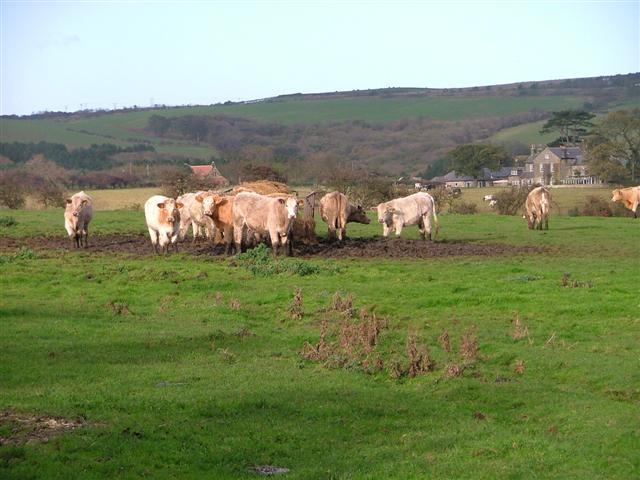 Pasture, Roxby Lane