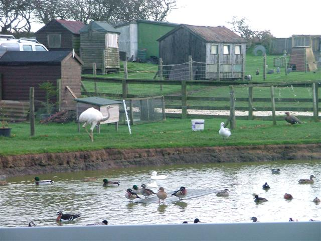 Duck Pond, With Rhea, Moor House Farm