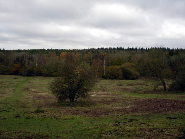 Ashmore Hill Copse, West Wood