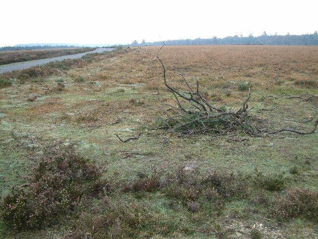 Heathland close to Slufters Inclosure