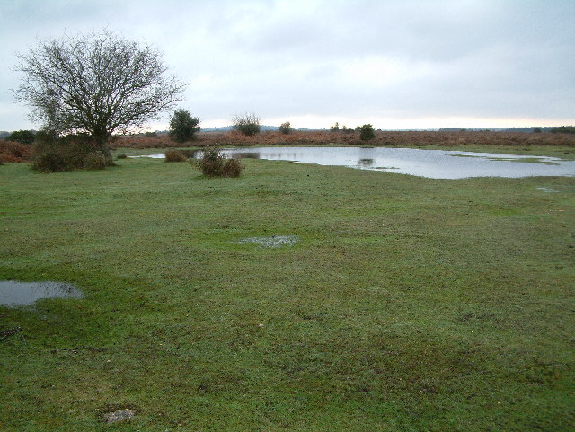 Ocknell Plain, New Forest