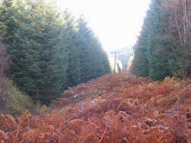 Forest near Firbush.