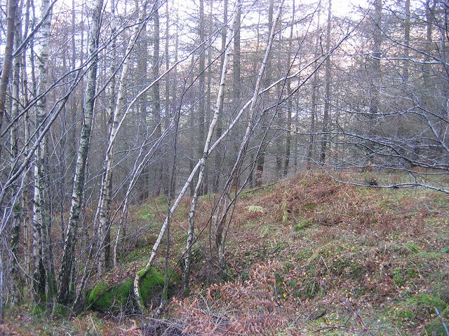 Forest above Firbush.