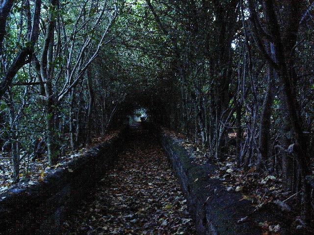 Dark lane near Rawdon