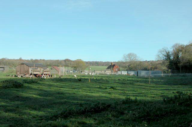 Poultry farming at Hyden Farm, near Hambledon