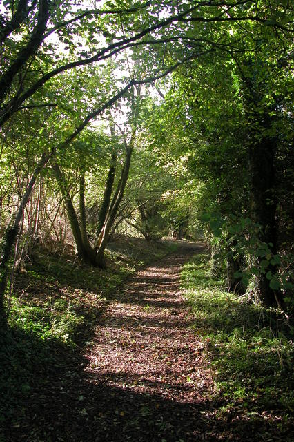 The Monarch's Way, near Hambledon