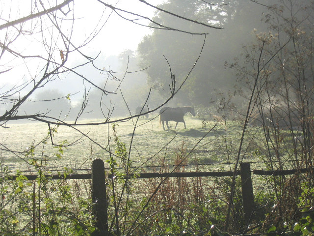 Horses in the early morning mist
