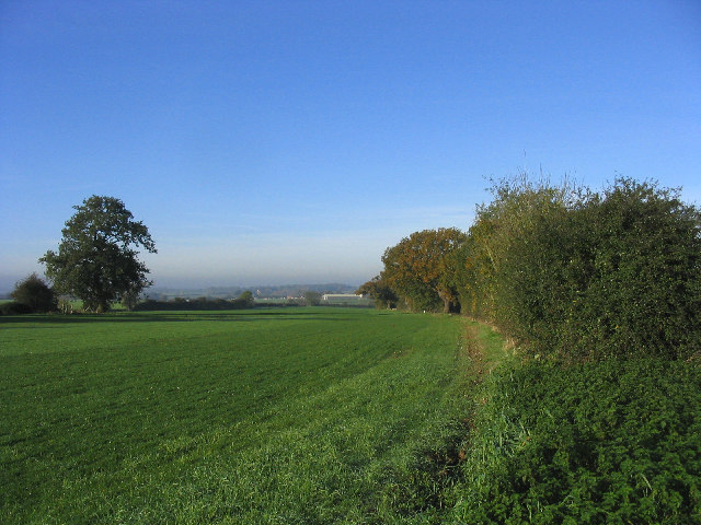 Hedge and field, near Norton Mandeville