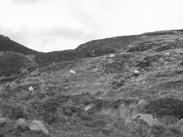 Slopes of Creag Gharbh.