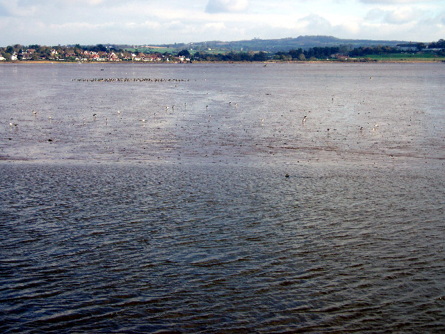 Wading birds on the Exe estuary