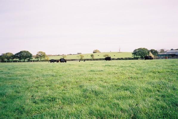 Pasture, Warfield