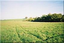 SU8974 : Chawridge valley by Andrew Smith