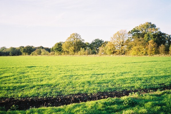 Field, Nuptown