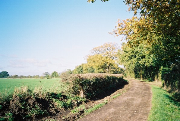 Bridleway, off the Drift Road